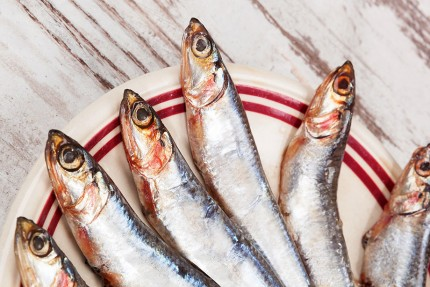 sardines_roc35